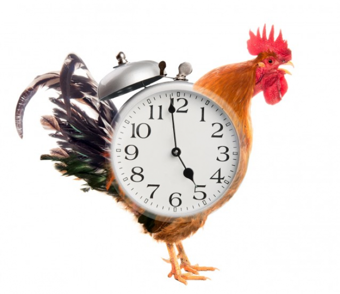 Collage. Rooster Alarm Clock