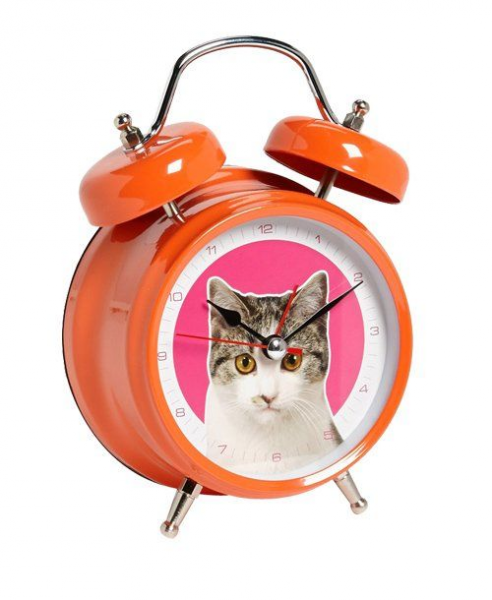 Cat Alarm Clock | cats things | Pinterest