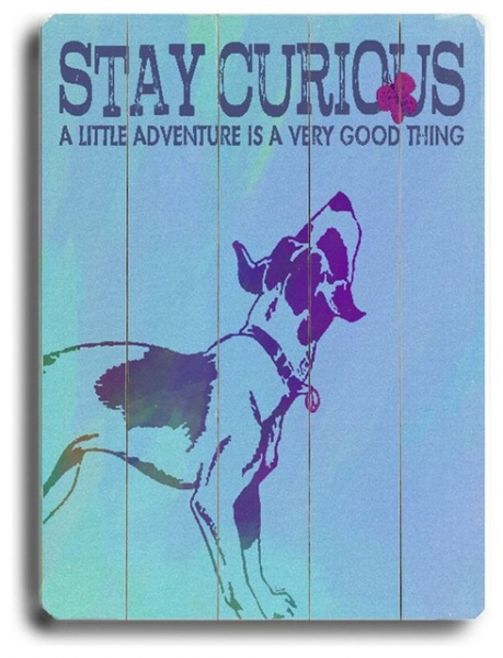 Artehouse 14 x 20 in. Stay Curious Wall Art Multicolor - 0003-9344-26 ...